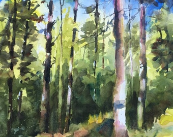 White Pine Forest northern Minnesota original watercolor