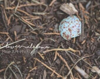 Broken Egg- Fine Art Photography