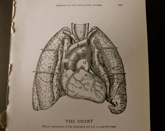 1916 MEDICAL CHART from antique medical book - The Heart