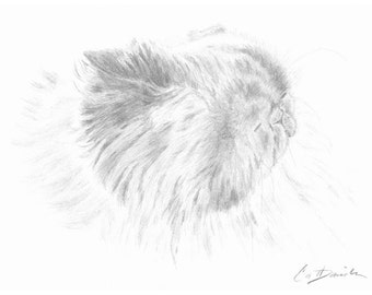 "Himalayan Cat Pencil Drawing Original Hand Drawn Art 8.5"" x 11"" Print Mother's Day Gift Birthday Present Cat Portrait Cat Lovers CatDKnits"