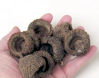 Huge Acorn Caps Felted Acorn Supply 8 Big Bur Oak Caps 1 Inch Tall or Over Craft Supply Autumn Fairy Hats Natural Woods Acorns Rustic Large