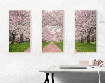 Pink Cherry Blossom Photograph Split Canvas, Cherry Blossom Split Canvas, Cherry Blossom Canvas, Flower Canvas, Nature Photography, Nature