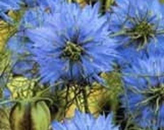Love-in-a-mist (or Nigella) Seeds