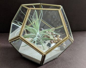 Geometric Brass Air Plant Terrarium with Pebbles, White Sand and Large Air Plant Kit
