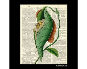TAILORBIRD NEST Dictionary Art Print Vintage Dictionary Page Book Art Print No.P239