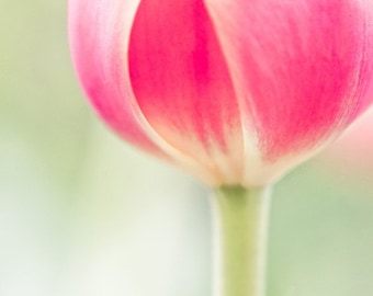 Mothers Day flower photo pink tulip picture - Embrace Lightly - 8x10 fine art print - home decor nursery floral wall art
