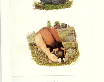 Lemmings art vintage 1970 French wall art Vintage rodent poster Animal art French Rodent decor Classroom decor Zoology decor Zoology poster