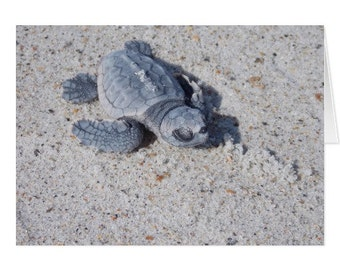 Baby Loggerhead Note Card