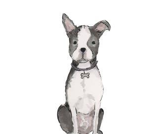5x7 Boston Terrier Print