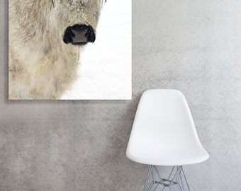 Stretched Fine Art Canvas of  A lovely White Cow named Chloe in the Snow