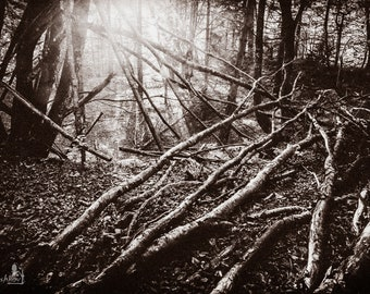 Landscape Photography, Forest Art Decor, Sepia Fine Art, Trees Wall Decor, Nature Art Print, Dry Trees Poster, Home Decor, Large Forest Art