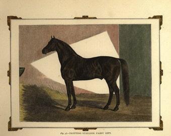 Antique Original Hand colored Engraving of Horse -