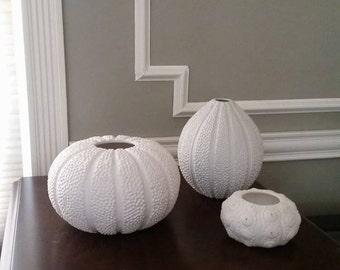 White Sea Urchin Shell Vases