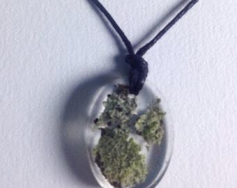 Little Lichen