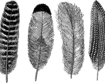 CONE 6 - Large Feathers #1 - Ceramic Decals, Glass Decals or Enamel Decals