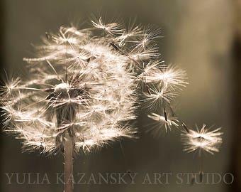 Instant digital download Dandelion sepia fine art nature photography Flower floral photography
