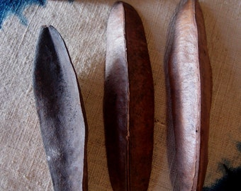 Dried Pods - Natural Triangle Pods - 4 inch Pods-  2 quarts-  Surfboard Pods