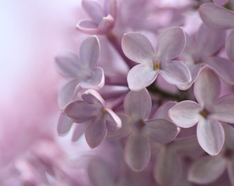 Innocence - Flower Photograph - Pale Purple Lilac Blossoms - 4x6, 5x7, 8x10, 11x14, 16x20