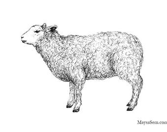 Sheep - Art Print