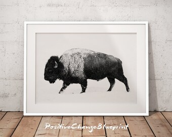 Bison print, Buffalo printable, Bison photography, Buffalo wall art, Bison printable, Buffalo snow, Buffalo print, Wild animals photography