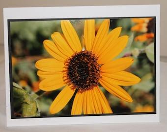 photo card, yellow flower, sunflower photograph