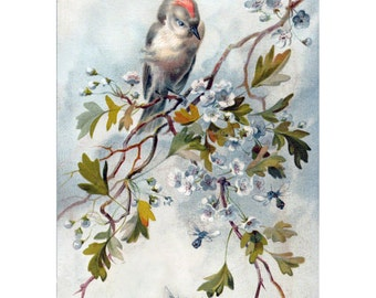 Birds Bees Fabric Block - Ruby Crowned Kinglet - Repro Hector Giacomelli