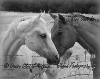 Black and white Horse Photography Heart print Love wall art home decor 8x10 11x14