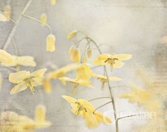 Yellow Flowers Photography, Yellow & Grey Wall Art, Spring Decor, Pictures of Flowers, Yellow Art, Yellow Flower Print