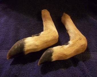 2 Deer Legs real animal bone weird taxidermy leg craft supply parts