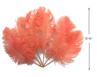 "Ostrich Feathers, 1/2 Lb - Apricot Ostrich Tail Wholesale Fan Feathers (Bulk) 12-16"" : 4234"
