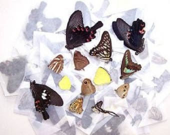100 Butterflies Moths Wholesale Mix Lot Unmounted Wings Closed