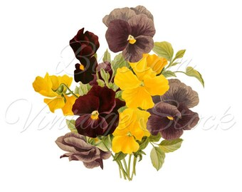 Bunch of Flowers Clipart, Pansies Botanical Flower Print VIntage Digital Antique Illustration for Print, Artwork INSTANT DOWNLOAD 2314