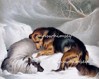 "Dog Art,  Dog Art Print, Family Rooom Art, Living Room Art ""Compassion - A Dog's Love""  #658"
