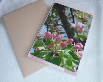 """Apple blossoms ' 10 buds, 5x15cm card"