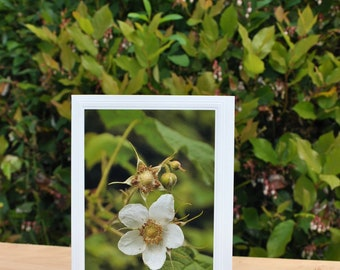 "Thimbleberry Flower Note Card - photo - 5"" x 7"" - greeting card - envelope - wedding -sympathy - card - Quinault - for frame TBF9"