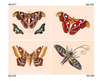 NA277-280 Artistic Ephemera Nature Print - Choose 8x10 or 5x7 - Colorful Moths and Butterflies, Butterfly, Papillons