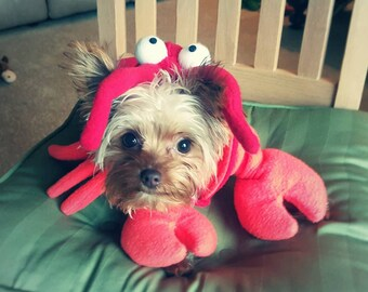 Lobster Costume for Dog or cat- ( xs. - lg.) by Cozy Pawz