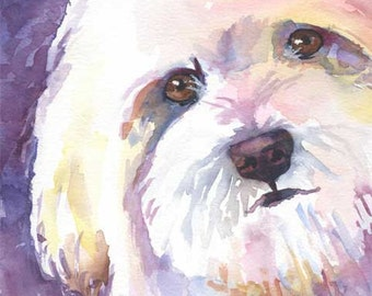 Havanese Art Print of Original Watercolor Painting - Dog Art 8x10