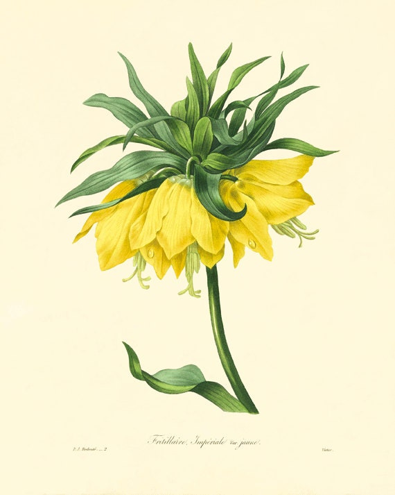 Yellow Lily art antique flower art Cottage wall art Victorian