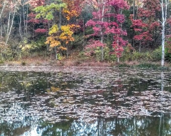Fall Reflections Pond Photo