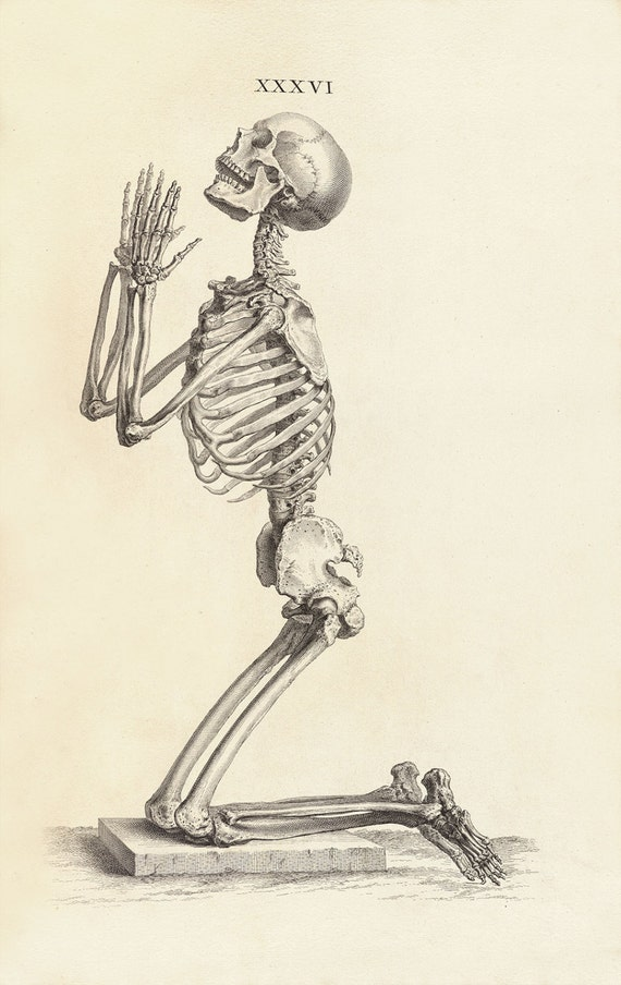 William Cheselden Human Anatomy Print : Side View of a