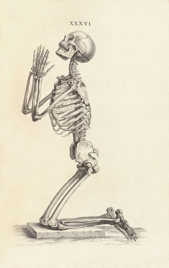 Side View Of Human Skeleton Choice Image - human anatomy organs diagram