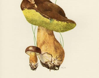 Vintage lithograph of the bay bolete from 1962