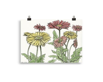 Gerber Daisies Illustration