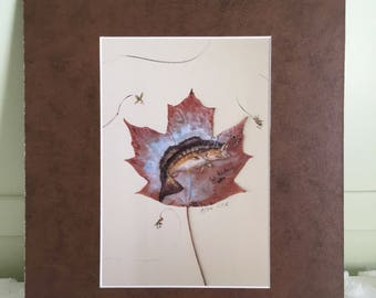 SPECIAL, Bass on Maple leaf print- matted in a med brown mat, matted size is 11 x 14