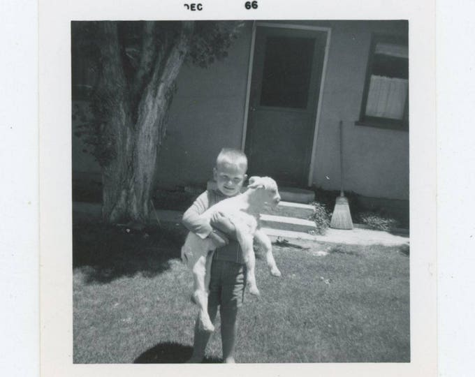Vintage Snapshot Photo: Boy & Lamb, 1966 [83655]