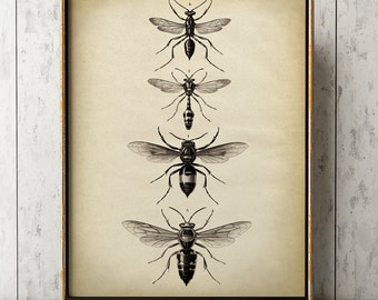 Insects print, Insect poster, bee print, wasp poster, fly insects chart, fly poster, insect wall art, aged sepia black and white