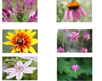 "Photo Prints - Ten 2"" x 3"" Photo Prints, Flower Flash Cards, Flower Photography, Miniature Flower Cards"