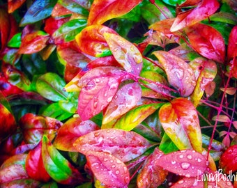 Morning Leaves Print, Nature Photography, Leaves, Autumn