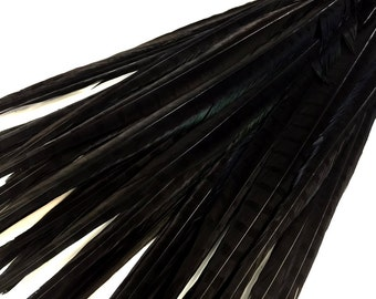 """Pheasant Tail Feathers, 50 Pieces - 20-22"""" BLACK Ringneck Pheasant Tail Wholesale Feathers (bulk) : 2064"""